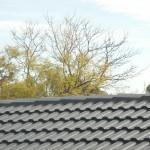 Grey Roof